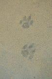 动物脚印  免版税库存照片