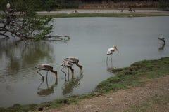 动物行星小组鸟 库存图片