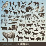 动物设置了 库存照片