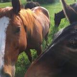 动物逃命 免版税库存照片