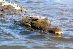 动物通配水族馆的鳄鱼 免版税图库摄影