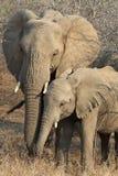动物野生生物 免版税库存图片