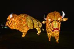 动物雅尔丹des Plantes的夜 免版税图库摄影