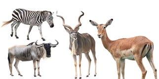 动物集合 免版税库存图片