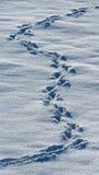 动物雪跟踪 美国 飞机场 库存图片