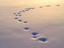 动物雪跟踪 免版税库存照片