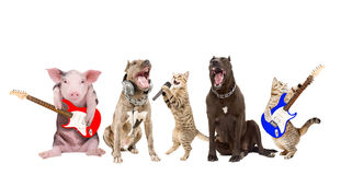 动物音乐家表现  库存照片