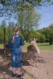 动物饲养女孩 免版税图库摄影