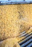动物饲养工厂 免版税图库摄影