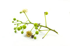 动物饲养的花。 免版税库存图片