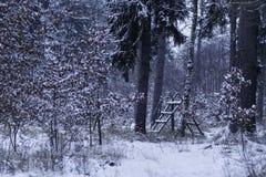 动物饲养者在一个积雪的森林里 免版税图库摄影