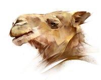 动物骆驼的被绘的画象在边的 皇族释放例证