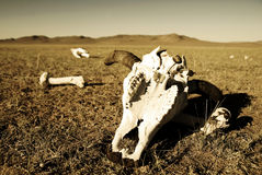 动物骨头保存了领域沙漠概念 免版税库存照片