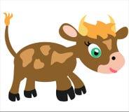 动物黄牛 库存图片