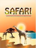 动物,在狂放的野生生物两长颈鹿 免版税库存图片