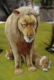 动物,有填充动物玩偶的动物园在游览中在意大利 免版税库存图片