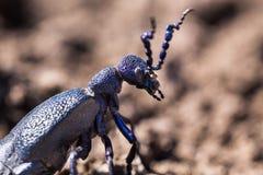 动物,甲虫,甲壳,天,垫铁,昆虫,宏指令,自然,亮光 库存图片