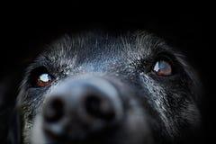 动物-老狗 免版税库存照片