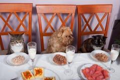 动物宴餐 库存图片