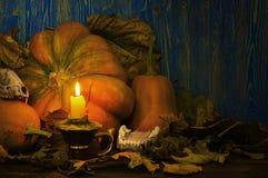 动物头骨和南瓜点燃了一个蜡烛在黄昏 免版税库存照片