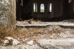 动物头骨在被放弃的修道院里 免版税库存照片