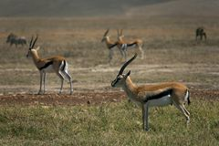 动物 免版税图库摄影