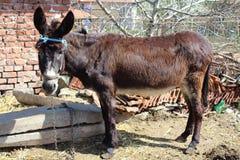 驴动物 免版税库存图片