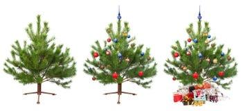 动画圣诞节随后的结构树 免版税图库摄影