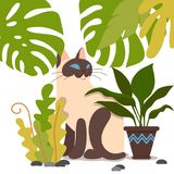 动画片双色的小猫 免版税库存图片