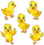 动画片小的小鸡汇集集合 向量例证