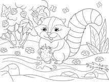 动画片彩图黑白自然 美国,北浣熊和浣熊洗涤草莓 向量例证