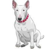 动画片杂种犬狗品种sittong 向量例证