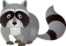动画片滑稽的浣熊 免版税库存照片