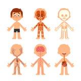动画片男孩身体解剖学 人类生物学系统解剖图 骨骼、静脉系统和器官导航例证 库存例证
