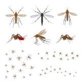 动画片颜色另外蚊子象集合 向量 库存例证
