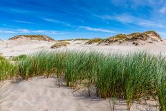 移动的沙丘在波罗的海附近停放在Leba,波兰 免版税库存图片