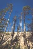 移动的沙丘在Slowinski国家公园,波兰 讨债者 图库摄影