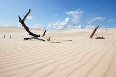 移动的沙丘波兰 库存图片
