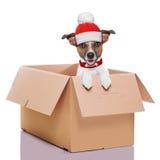 移动的箱子冬天狗 免版税库存图片