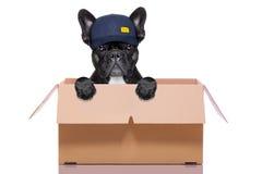 移动的箱子狗 免版税图库摄影