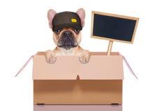 移动的箱子狗 免版税库存照片