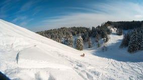 移动的雪上电车在山的冬天森林里 免版税图库摄影