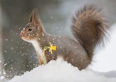 移动的雪 免版税库存照片