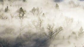 移动的雾Timelapse电影在树中的在桑迪河从Jonsrud观点一清早 股票录像
