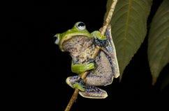 滑动的青蛙 免版税图库摄影