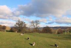 滚动英国乡下Cumbria的湖区国家公园 库存图片