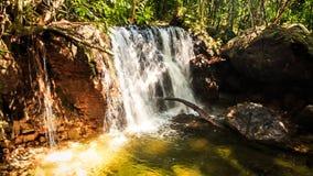 移动远离落入池塘的小瀑布在森林里 股票视频