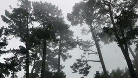 移动通过蠕动的森林 影视素材