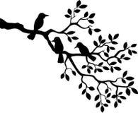 动画片与鸟剪影的树枝 免版税图库摄影