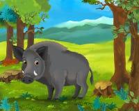 动画片动物场面-公猪 图库摄影